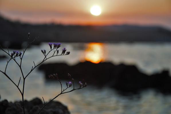 la lentezza risoluta del tramonto di nisidep