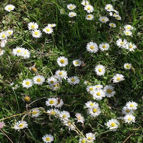 white by Gordana Djokic - Nature Up Close Flowers - 2011-2013 ( nature, white, day, flowers, spring )