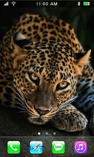 Jaguars HD Gallery 2015