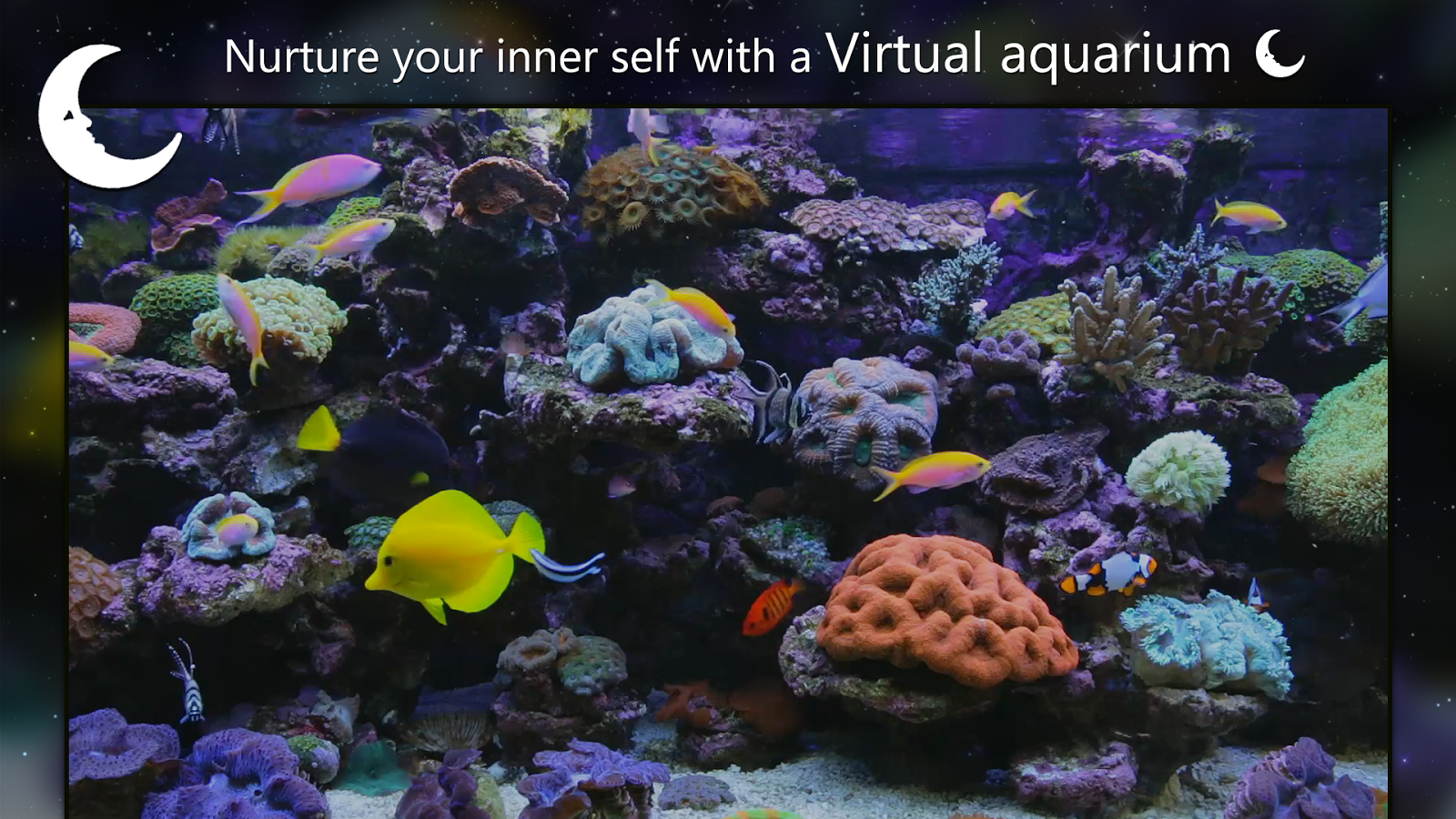 Coral fish aquarium android apps on google play for Fish tank app
