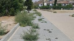 La maleza  crece salvaje en las aceras y calles de la costa de Vera.