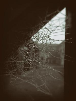 behind the web di gabaglio.marco