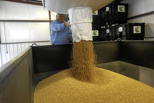 Crucial crop: Farmer Jason Bean fills a soya bean container in Gideon, Missouri, US. The US-China trade war has rattled the soya bean market. Picture: REUTERS