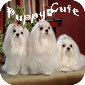 Puzzles Puppy Cute
