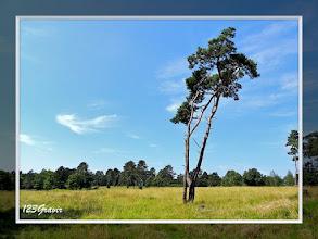 Photo: Plateau des Abannets