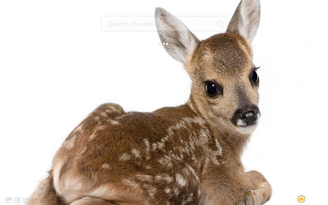 Deer HD New Tab
