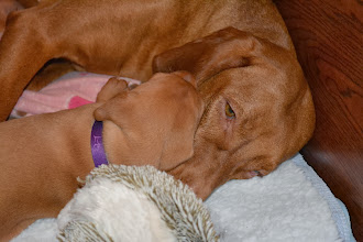 Photo: Mommy's make the BEST pillows
