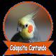 Calopsita Cantando Hino  Nacional Download on Windows