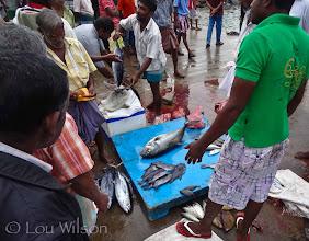 Photo: Tangalle Jetti fish market early morning Sri Lanka