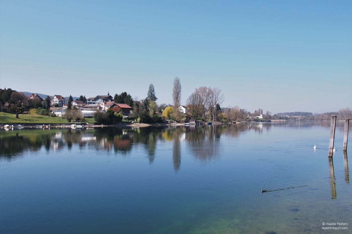 Stein am Rhein (Le petit requin)