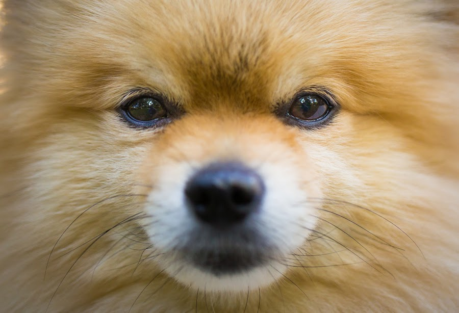by Ben Porway - Animals - Dogs Portraits ( peaceful, dogs, louie, danielle, longmeadow, outdoors, penny, jacqui, outside )