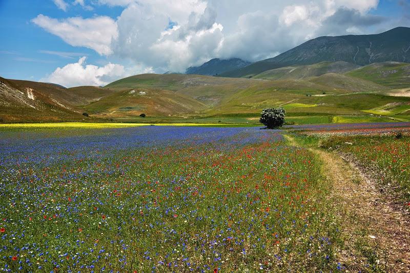 The road of flowers  La strada dei fiori di Concetta Caracciolo