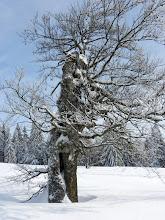 Photo: 20 Lindbergschachten: Charakterbaum - von Wind und Frost gezeichnet