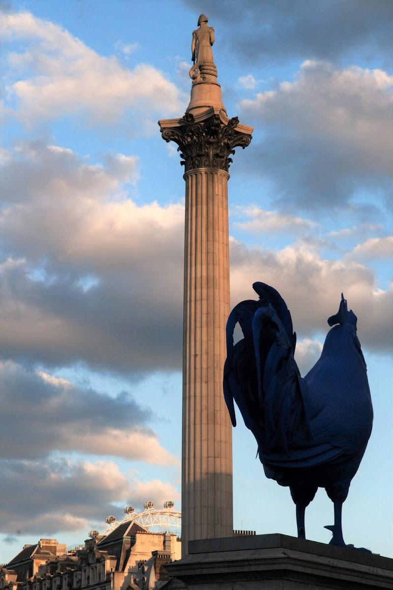 Sveglia a Trafalgar Square di Rosa