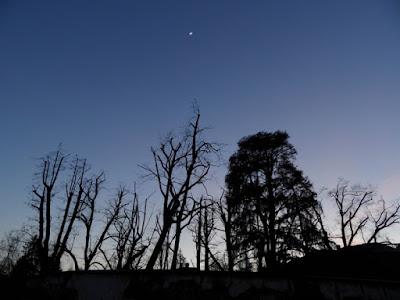 Under the moon di steve.pistis