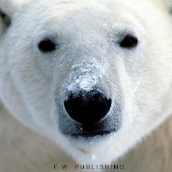 Polar Bear LITE