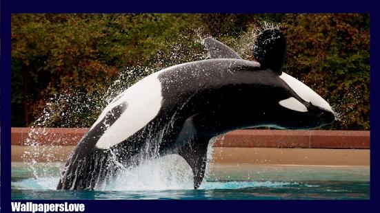 Orca wallpaper apps on google play screenshot image altavistaventures Images