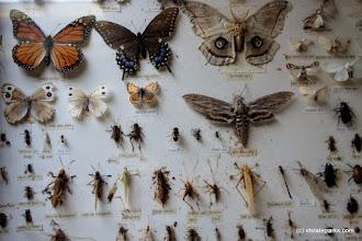 Photo: Nature center at Burton Island State Park