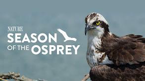 Season of the Osprey thumbnail