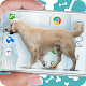 Dog on screen: Woof woof joke APK
