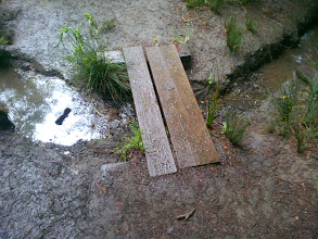 Photo: Wet planks under the redwood trees