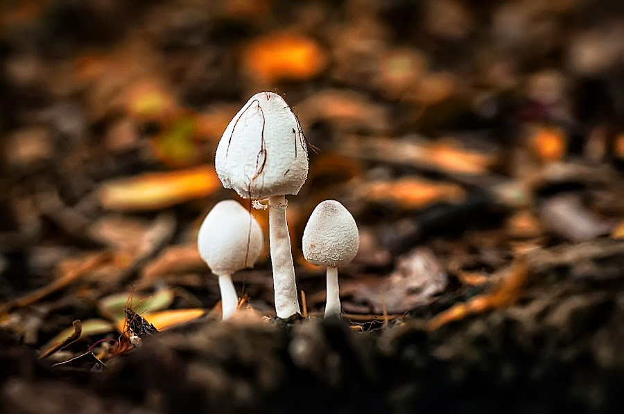 3 by Kawan Santoso - Nature Up Close Mushrooms & Fungi