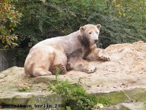 Photo: Knut entscheidet sich fuer eine Ruhepause ;-)