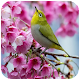 Spring Wallpaper HD for PC-Windows 7,8,10 and Mac