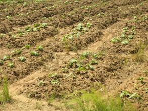 Photo: légumes du potager septembre 2009