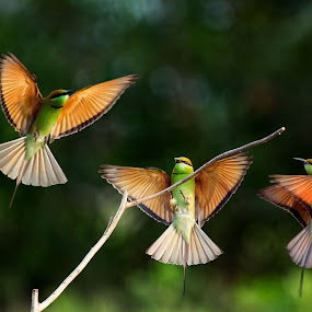 We can dance by Thảo Nguyễn Đắc - Animals Birds