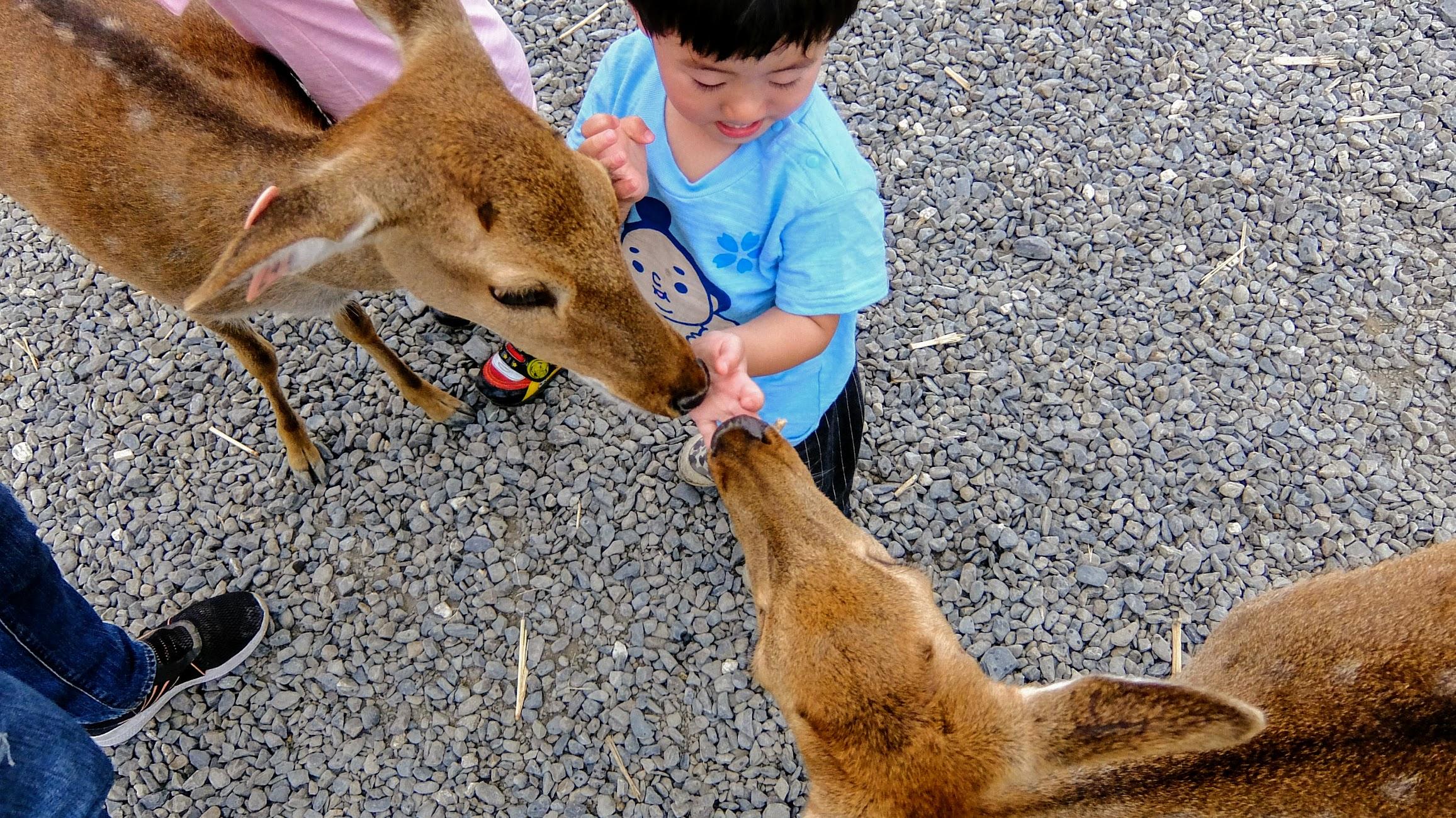 梅花鹿頗溫馴的,所以帶小朋友來親子遊是很棒的一件事情...