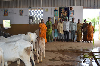 Photo: JIVA Gosala Team (Cowshed with Pure Indigenous Varieties of Cows)