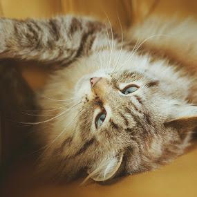 Basia by Jonicus Dudarev - Animals - Cats Portraits ( cats, cat, kitty, кошки )