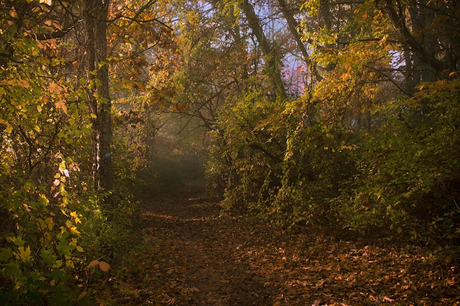 Fall Trail by Gary Poulsen - Novices Only Landscapes ( fog, fall, trail, path, leaves,  )
