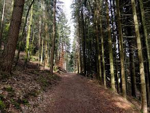 Photo: straight  #waywednesday // +#WayWednesdayby +Peter Carroll& +Rob Tilley #fotoamateur // +Fotoamateurby +Britta Rogge+Scotti van Palm+Karsten Meyer+Markus Landsmann+Remo Primatesta #trees // #forest // #way  #Franken  #Aufseß
