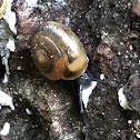 Quick Gloss Snail