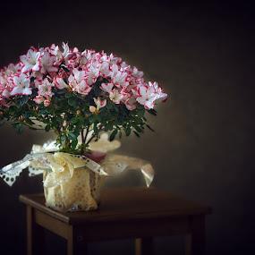 Flowers by Marek Rosiński - Flowers Flower Arangements ( beautiful, flowers, beauty, flowers photo, beautiful flower )