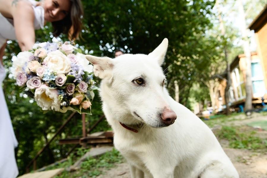 Wedding photographer Artur Pogosyan (Pogart). Photo of 08.10.2016