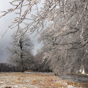 Frozen trees by Eugen Opritescu - Nature Up Close Trees & Bushes (  )