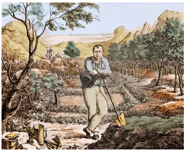 Image of The Gardener of St Helena - Napoleon in exile on St Helena, engraving, 19th century - Exile de Napoleon to Sainte - Helene (Saint Helene), Unknown Artist, (19th century) © Stefano Bianchetti / Bridgeman Images