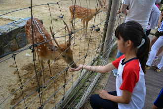 Photo: In the Seoul Forrest Park, feeding Bambi