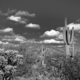 by Ron Meyers - Black & White Landscapes