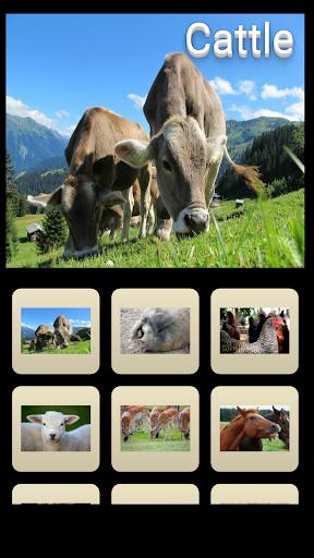動物圖片100