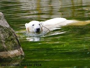 Photo: Schwimmrunde mit Stoeckchen ;-)