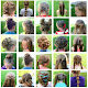 Hairstyles for girls for PC