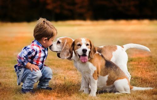 Boy and dogs by Piotr Owczarzak - Babies & Children Children Candids ( sweet, dogs, park, children, summer, cute, boy )