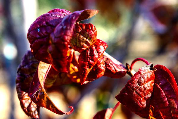foglie in Autunno di gianniturtur