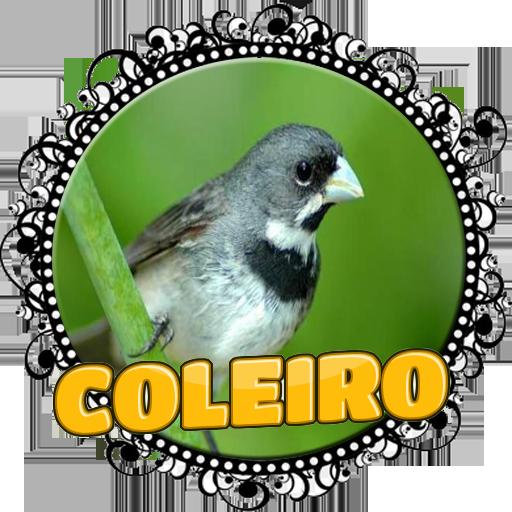 FÊMEA DE COLEIRO MACHEANDO