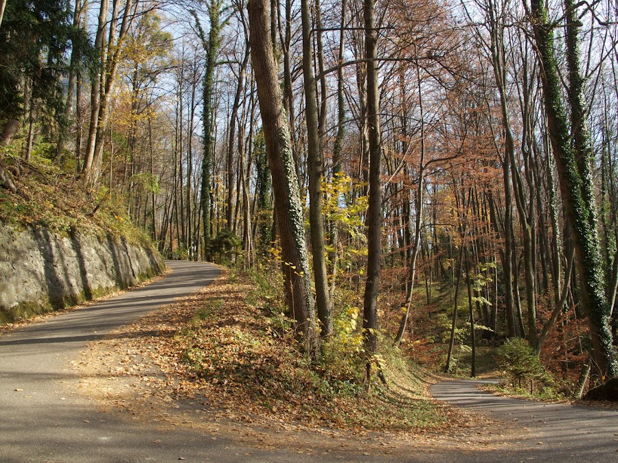 Walensee by Serguei Ouklonski - City,  Street & Park  City Parks ( countryside, mountain, wood, no person, st gallen, leaf, travel, road, landscape, tree trunk, nature landscape, sky, nature, tree, shadow, no people, idyllic, switzerland, perspective, hill, scenics, forest, beauty in nature, scenic, sunlight, fair weather, outdoors, fall, trees, woodland, tranquility, day, daylight, lush - description, growth )