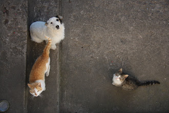 Photo: - Kierowniku, rzucisz nam coś do zjedzenia?